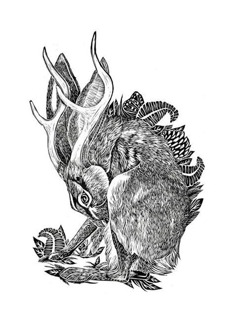 Best Jack Rabbit Ideas Pinterest Hare Off