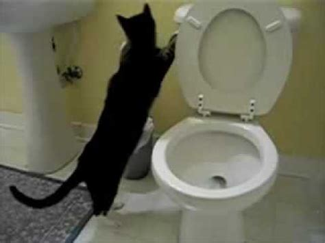 to flush the toilet cat flushing a toilet