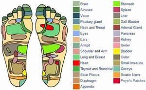 31 Printable Foot Reflexology Charts & Maps - Template Lab