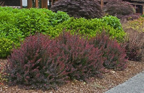 barberry    awesome pic form houzz