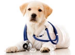 bayview animal clinic veterinary clinic norfolk virginia bayview veterinary
