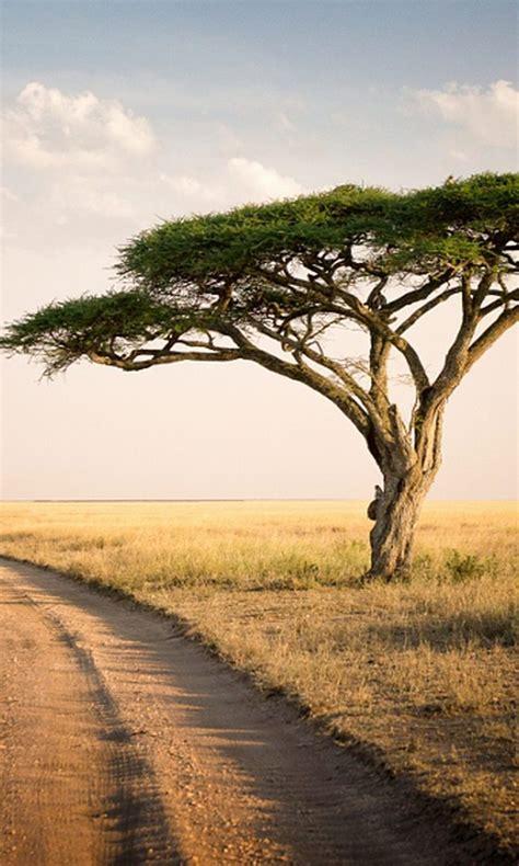 serengeti park tanzania wallpaper  desktop