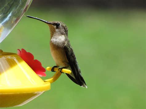 sheris healing flower garden july s new baby hummingbirds