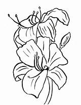 Coloring Lily Flower Pages Easter Printable Template Printables Drawing Line Samantha Samanthasbell Bell Pdf Drawings Continue Reading sketch template