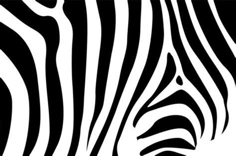 zebra  vector    vector