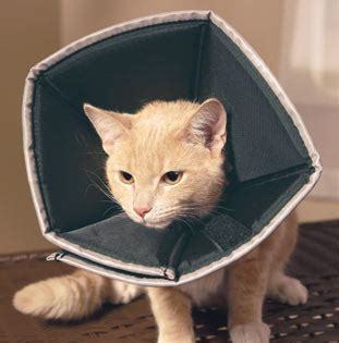 soft ecollar  cats cat comfy cone ecollar alternative