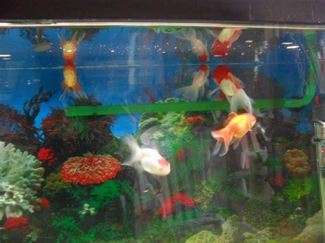 mon aquarium et mes poissons
