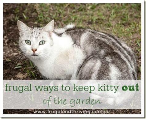 how to keep cats out of yard frugal ways to keep kitty out of the garden