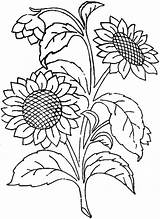Sunflower Coloring Pages Printable Adults Sunflowers Farm Fair sketch template