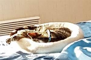 Spa Vannes Chien : marette spa de vannes et de la r gion ~ Dallasstarsshop.com Idées de Décoration