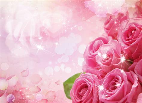 Pink Roses Background Pink Roses Background Material Pink Background