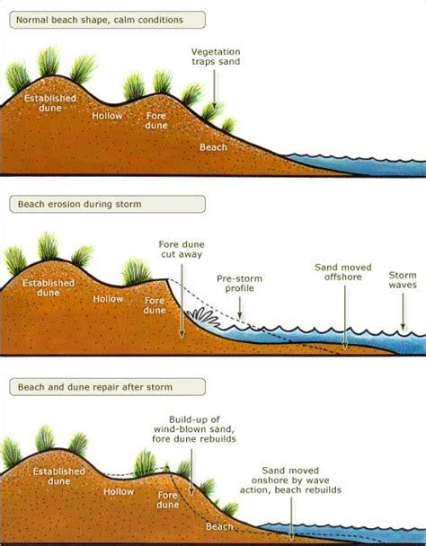 Fore Dune Formation Erosion Coastal Shoreline