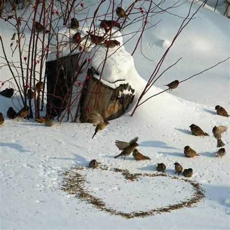 lustige winter bilder 80 coole winterbilder zum inspirieren
