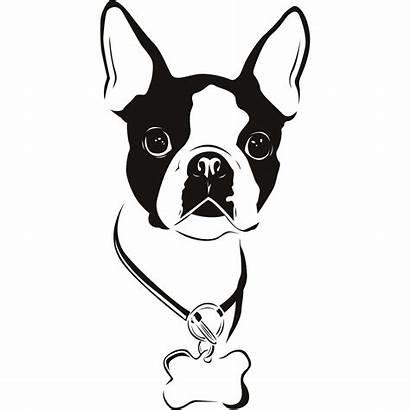 Terrier Boston Cartoon Clipart Clip Cliparts Graphic