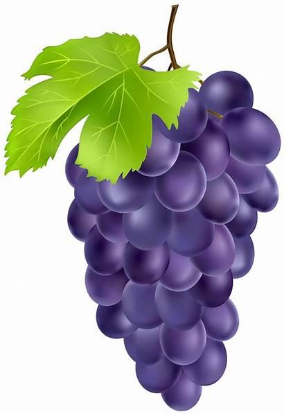 Clipart Grape Grapes Transparent Webstockreview Printable