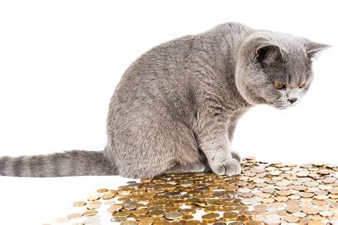 Wie Hoch Sind Die Kosten Fuer Eine Pelletheizung by Wie Hoch Sind Die Kosten F 252 R Einen Hund Oder Eine Katze Im