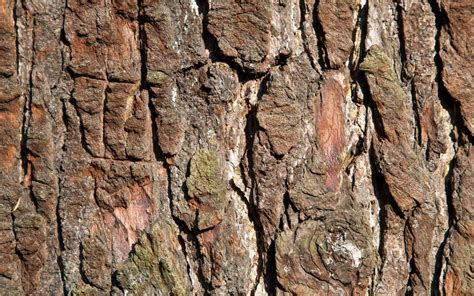 Background Images Of Trees by 17 Fantastic Hd Tree Bark Wallpapers