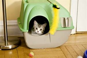 filecat housejpg wikimedia commons With can you train a cat to go outside for bathroom