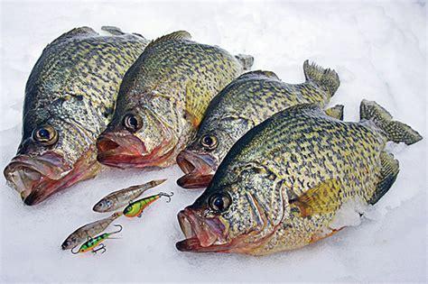 winter crappie forage tactics  fisherman