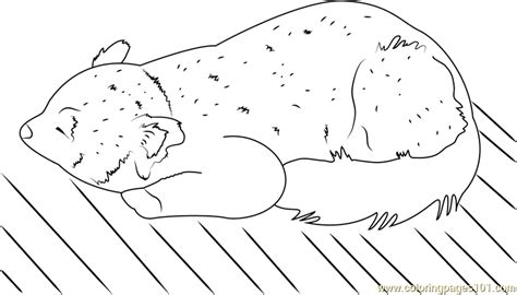 red panda coloring page  red panda coloring pages