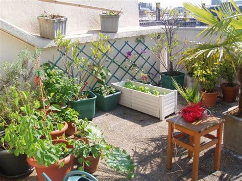 planter framboisier en pot fruits sur terrasse au jardin forum de jardinage