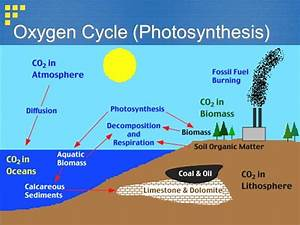 Oxygen Cycle With Diagram
