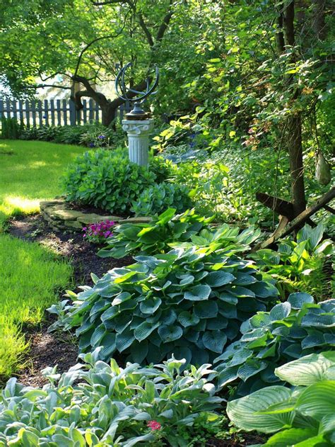 hosta shade garden flickr hostas garden ideas pinterest