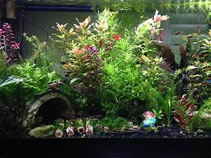 Live Plant Aquarium For Beginners Aquarium Design Ideas
