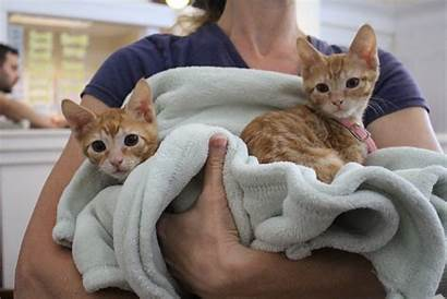 Kittens Adorable Clear Adopted Shelters During Were