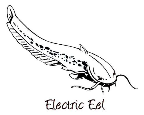 electric eel image coloring page electric eel image
