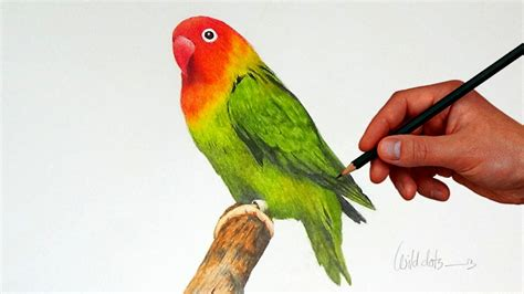 love birds drawing images  getdrawingscom