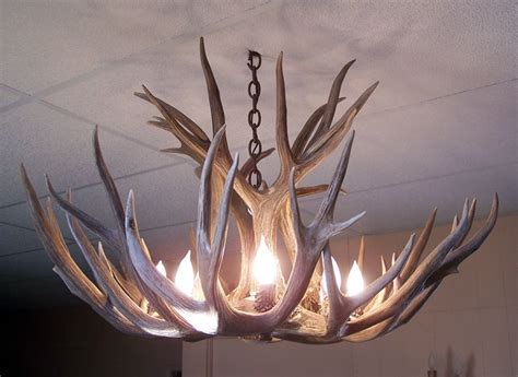 antler chandeliers and antler lighting warehouse mule