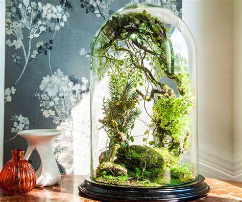 small trees  terrariums ja roccommunity