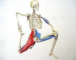 The very best psoas major lower back pain get it here