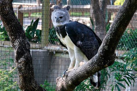 galeria de imagenes los animales mas peligrosos de la selva