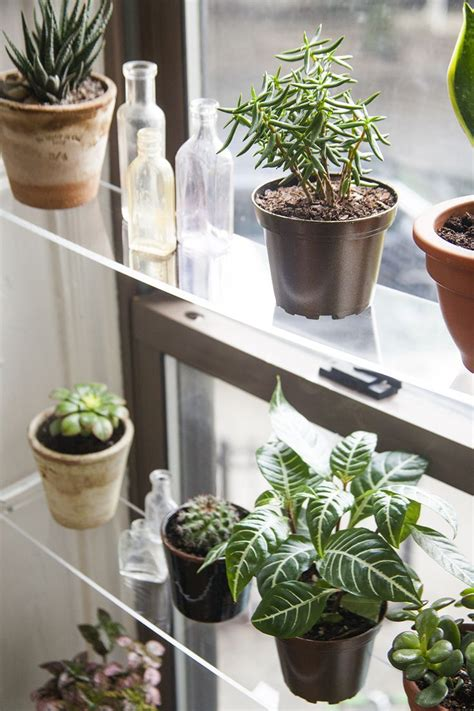 diy floating acrylic shelving  plants  front