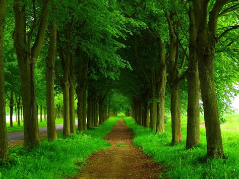 dirt path  green trees hd wallpaper background image