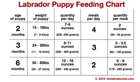 feed  puppy   tips  puppy diets