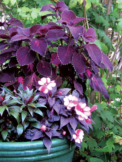 zone 10 shade plants 19 colorful plants for shade gardens sunset magazine