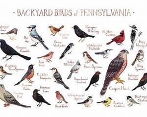 backyard bird identification guide - 28 images