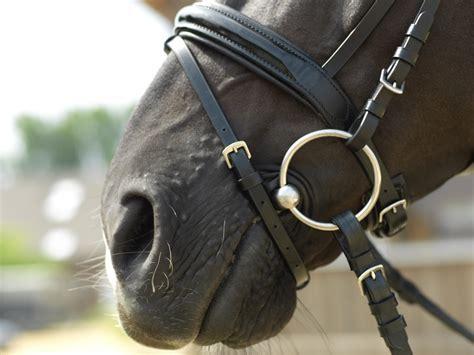 Trense Pferd Richtig