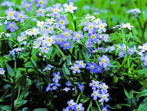 Teichpflanzen Fuer Verschiedene Wasserzonen by Teichpflanzen Spezial Sortimente Teichpflanzen