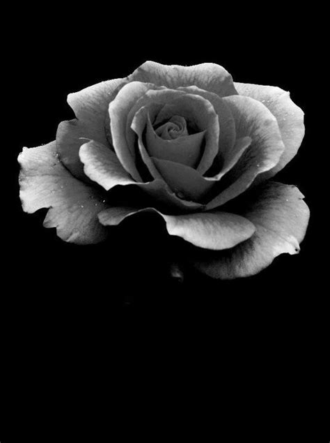 grayscale rose - Yahoo Image Search Results | COLORING