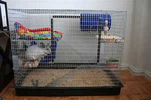 Chinchillas as Pets - Cages for Pet Chinchillas