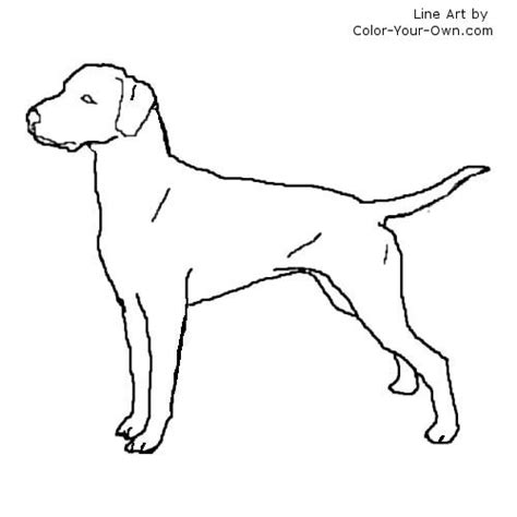 pointer dog coloring pages coloring pages
