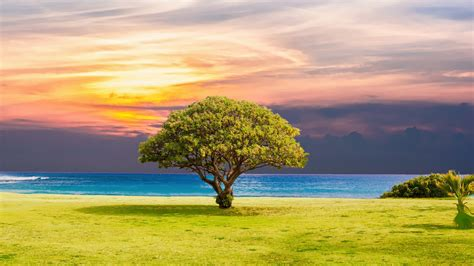 tree grass beach ocean landscape  wallpapers hd
