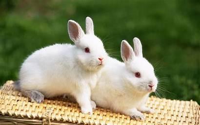 Wallpapers Rabbits Rabbit
