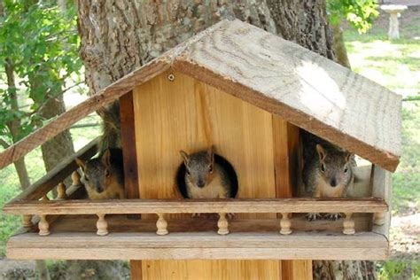 plans build  squirrel house squirrel home bird house kits bird houses