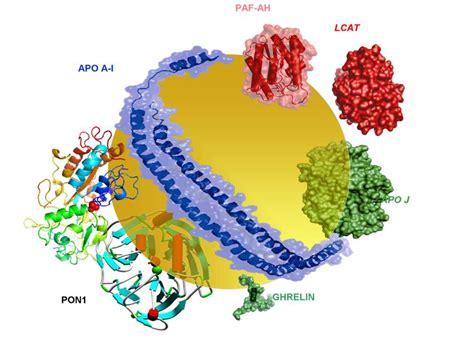 biochimica della nutrizione dispense laboratorio di biochimica degli alimenti e della