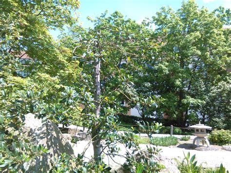 Japanischer Garten Bayern by Japanischer Garten 10 Photos Parks H 246 Chberger Stra 223 E